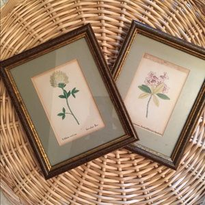 Other - Botanical print wall art framed
